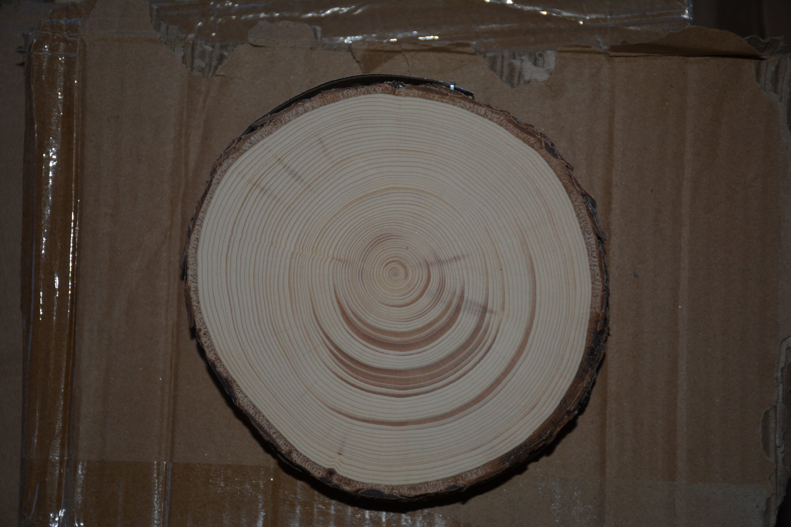 Tree ring showing avalanche influence